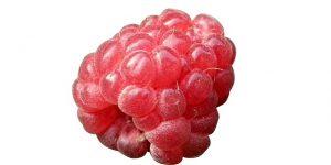 berry-211887_640