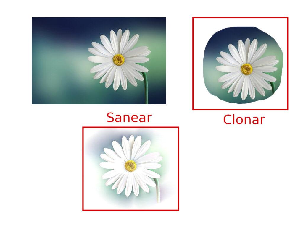 diferencia-sanear-clonar